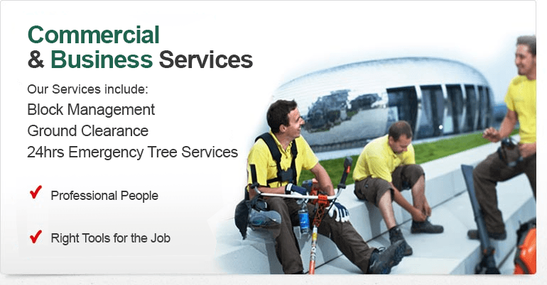 Business & Specialist Services
