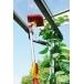 WOLF GARTEN Multi-Change® Angle Broom