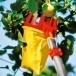 WOLF GARTEN Multi-Change® RGM Adjustable Fruit Picker