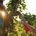 WOLF GARTEN PC370MS Multi-Change® Tree Care Pruning Saw